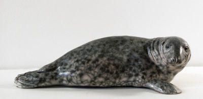 zeehond-w